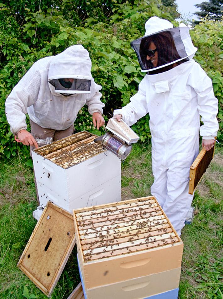 Bees_main