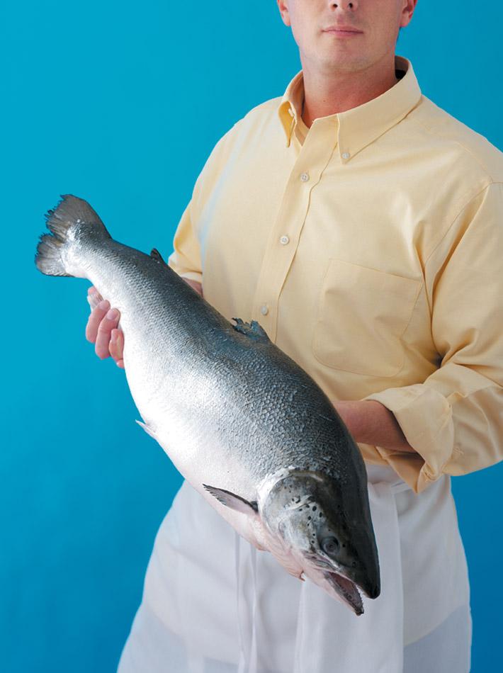 Salmon_main