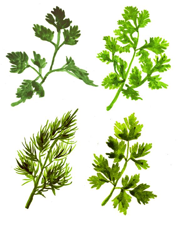 herbs_main