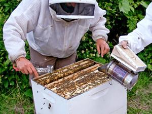 Honey of a hobby