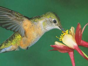 Best of Birds and Blooms