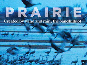 A Prairie in Motion