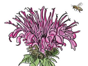 Bee Flowers