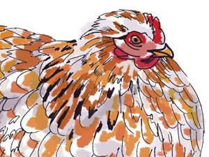 Fancy Chickens