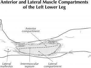 Leg Compartments